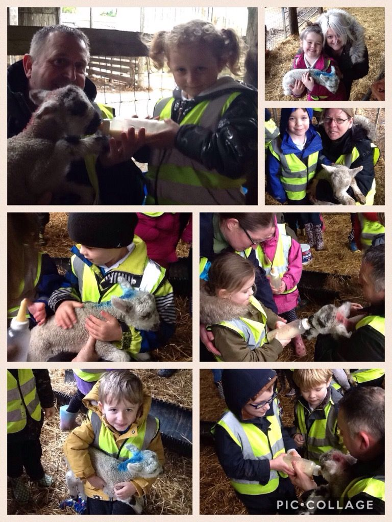 Reception Cheverton Farm Visit!