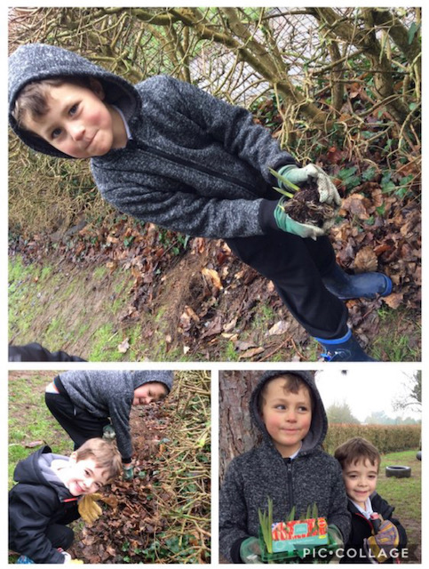 Bulb planting in Reception